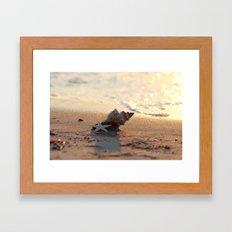 Shell on the sea Framed Art Print