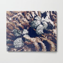 A dusting of snow Metal Print