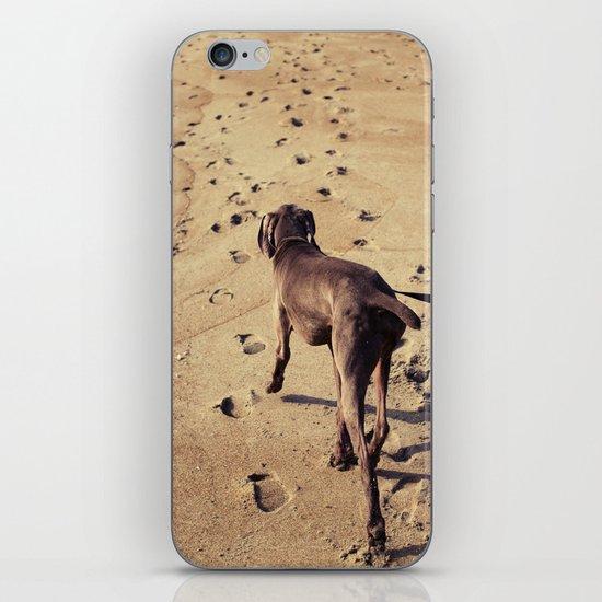 beachdog iPhone & iPod Skin