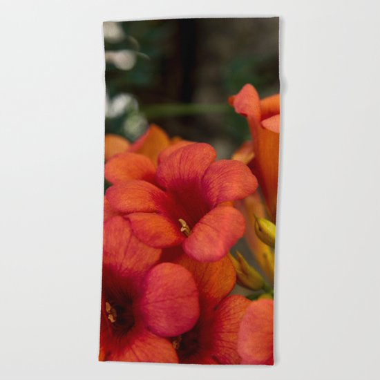 Bignonia Flowers. Photography . Beach Towel