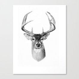 Whitetail Canvas Print