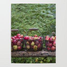 Autumn Apples Rustic Organic Food Still Life Poster