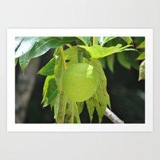 Fruit Art Print