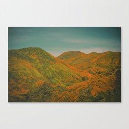 California Poppies 022 Canvas Print