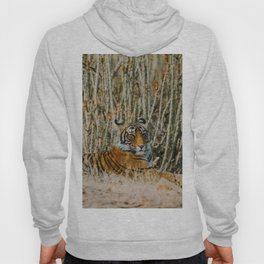 The Tiger (Color) Hoody