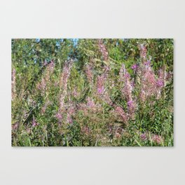 Wild Lavender On A River Bank Canvas Print