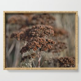 Seed pots   nature photography   brown Serving Tray