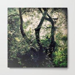 Waghai Botanical Gardens 597 Metal Print