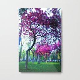 Pink flowering trees in the park Metal Print