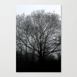 The trees of the mind are black. ' Canvas Print