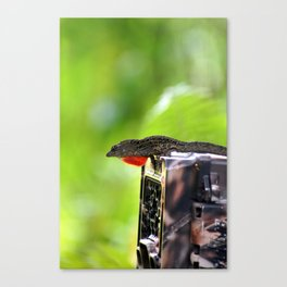 Red throat Canvas Print