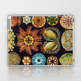 Ernst Haeckel Sea Squirts Ascidiae Laptop & iPad Skin