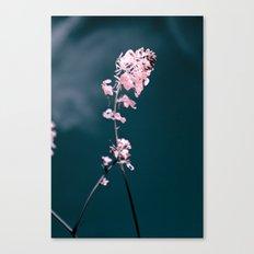 Pink Mustard Canvas Print