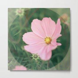 Wild flower in pink 1 Metal Print