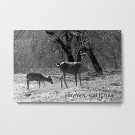 The doe and young buck... Metal Print
