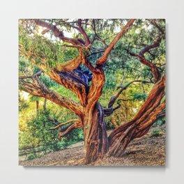 The life of a tree Metal Print