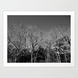 Dead Tree Florest Art Print