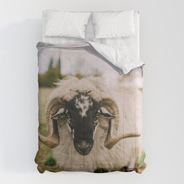 The Curious Sheep Comforters