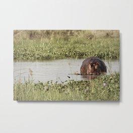 The Lurking Hippo Metal Print
