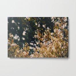 Rainy trees Metal Print