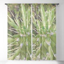 Cactus Close-Up 2 Sheer Curtain