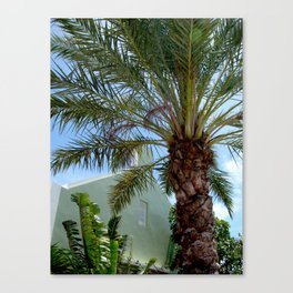 Grand Turk Palm and Building Canvas Print