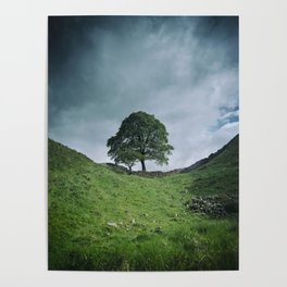 Back to Sycamore Gap Poster