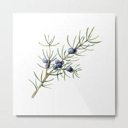 Christmas Tree Botanical Juniper Branch Metal Print