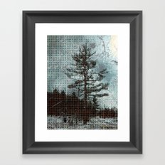 Old Pine Tree Framed Art Print