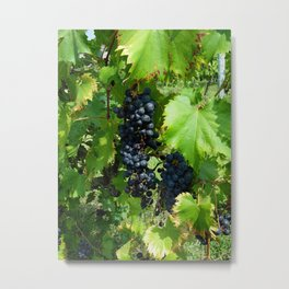 Grapes in the Sunshine Metal Print