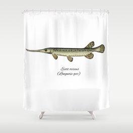 Longnose gar Shower Curtain