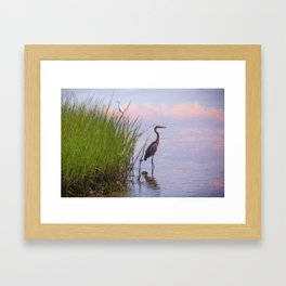 Blue Heron In Assateague Framed Art Print
