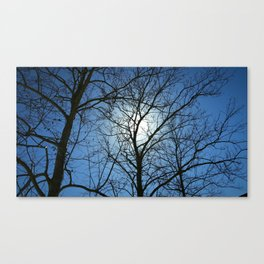 sycamores in the winter Canvas Print