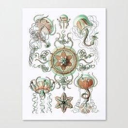 Ernst Haeckel - Trachomedusae (Jellyfish) Canvas Print