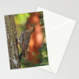 Nortern Flicker Stationery Cards