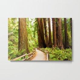 Path in Muir Woods Metal Print