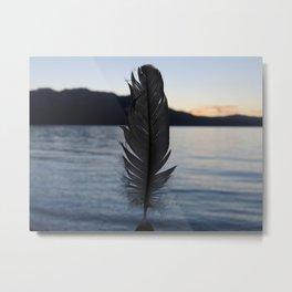 Feather.  Metal Print