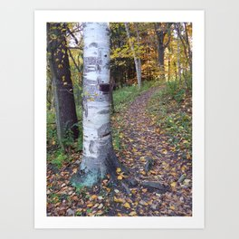 Birch Tree Trail Art Print