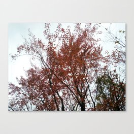 A tree in the fall. Canvas Print