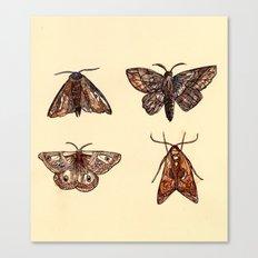 Moths. Canvas Print