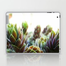 Tropical Colors Laptop & iPad Skin