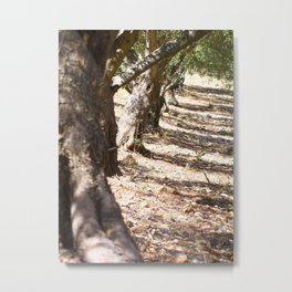 Olive orchard Metal Print