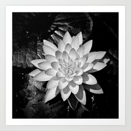 Water Lily in Black and White from Overhead Art Print