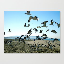 Seagulls and the Sea Canvas Print