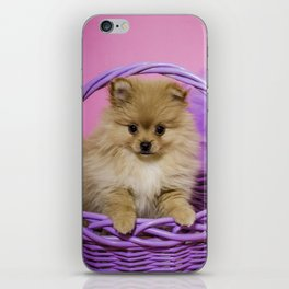 Tan Pomeranian Puppy Sitting in a Purple Basket with Purple Floral Decorations and a Pink Background iPhone Skin