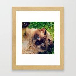 cat cute grumpy  Framed Art Print