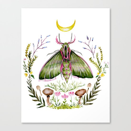 Pink Moth Canvas Print