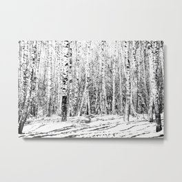 Birch Grove On A Sunny Winter Day In Black And White Metal Print
