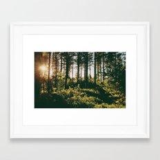 sunset through pine tree forest. Framed Art Print