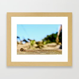Journey of the Hermit Crab Framed Art Print